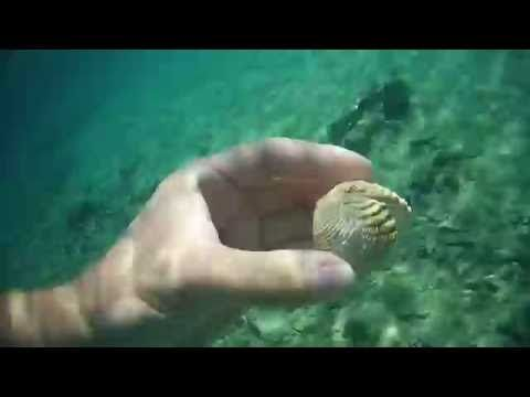 Base-Star.net » Galerie » Videos von Udo Weiß » Schnorchel bei der Sahara Bucht Insel Rab, Kroatien 2016