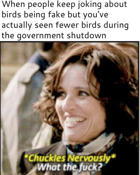 The Birds Are Fake Most Hilarious Memes Government Memes Tumblr Funny