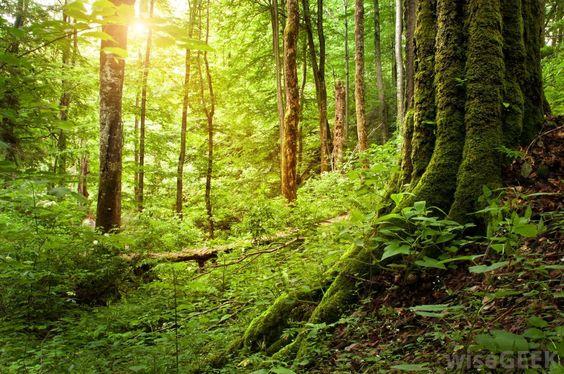 forest - Pesquisa Google