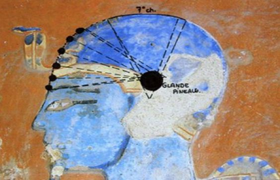 La glande pinéale par Sergio Machado Aussi petite qu'un pois, et de la forme d'une pomme de pin, d'où elle tire son nom, la glande pinéale est considérée comme étant un troisième oeil, pour avoir l...