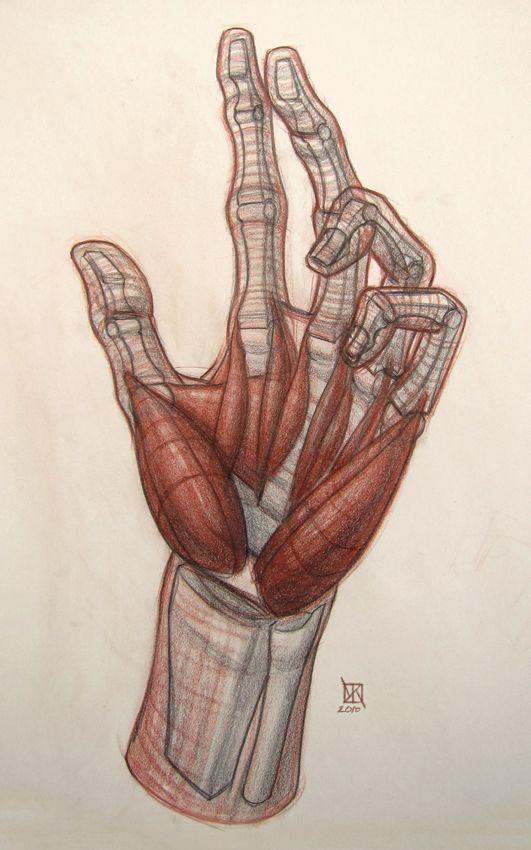 http://kylekane.com/anatomy/anatomy.html   hand anatomy   Pinterest ...