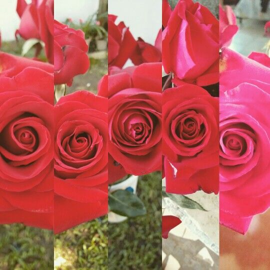 Roses are the most beautiful!!