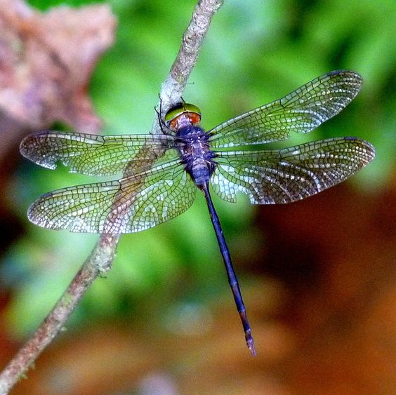 1000 ideas about dragonfly meaning on pinterest mean - Brown butterfly meaning money ...