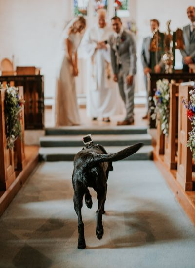 The CUTEST way to involve your pets at your wedding - this couple's dog was their ring bearer!! This laid-back meadow wedding was inspired by fun, festivals and bohemian spirit with a life long furry friend to assist with the rings during the ceremony!