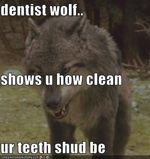 Funny Pictures With Captions Clean With Animals Funny Wolf Pict...