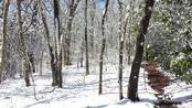 Trail Journals Photos - 2014 Appalachian Trail - snow on ground