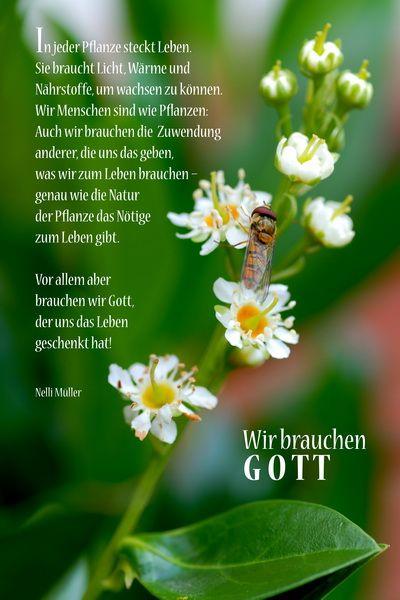 Wir brauchen Gott - In jeder pflanze steckt Leben. Sie braucht Licht, ...Nelli Müller