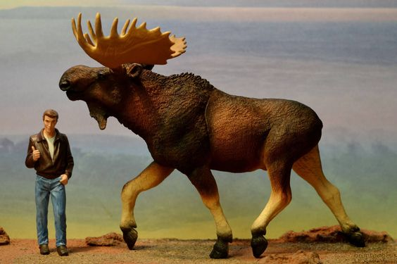 Moose (Safari Ltd - Wildlife Wonders) - Animal Toy Forum