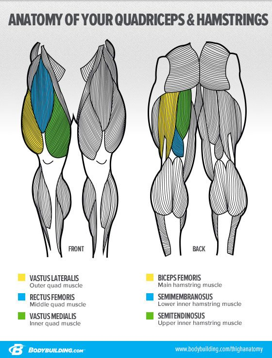 Bodybuilding.com - Ask The Siege: 'What's The Best Way To Build Big Legs?' -- Anatomy of the Legs and how to change their shape