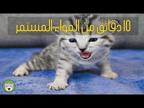 10 دقائق مواء القطط يجعل القطط تسترخي Youtube Animals Cats Art