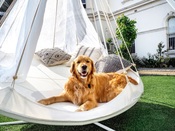 If you want something to love you forever, buy a dog, feed it, keep it around…and put it in your TiiPii Hammock Bed