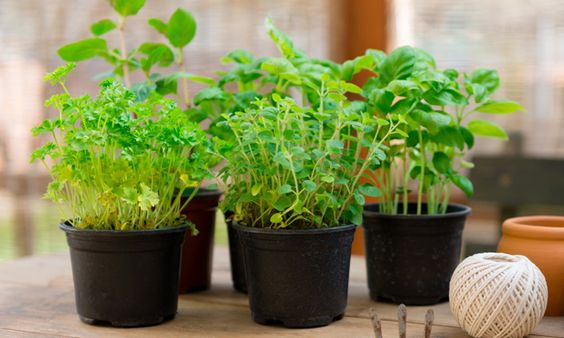 Como plantar ervas aromáticas. Guia para criar o seu jardim de ervas aromáticas em sua cada.