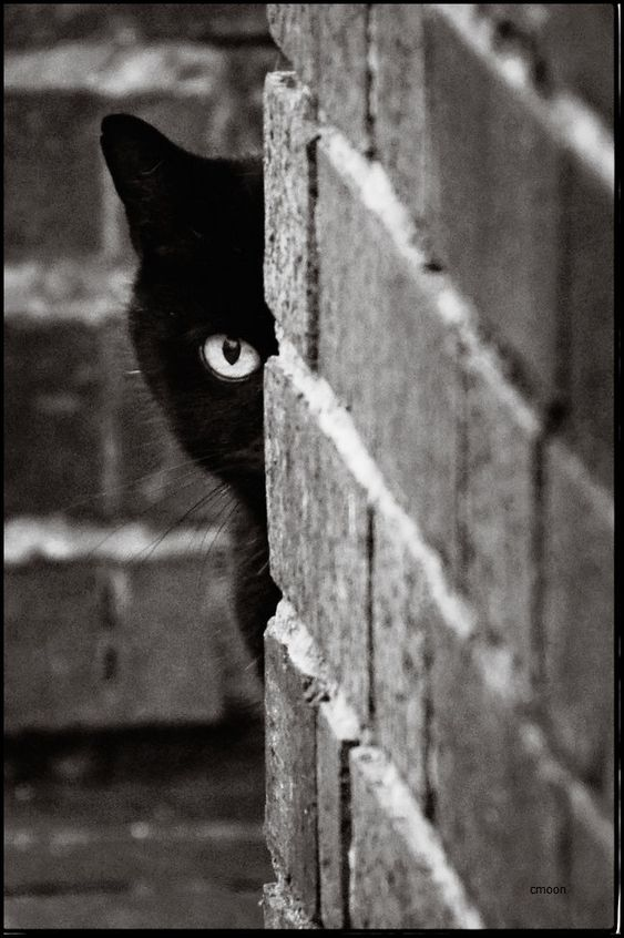 """Black Cat Advice: """"A successful man, (or woman) is one who can lay a firm foundation with the bricks others have thrown at him."""" (Or her.)                                                                                                                                                     More"""