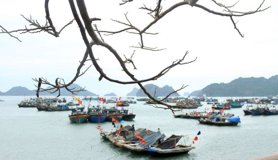 Spring end at Cat Ba Archipelago, UNESCO Man and Biosphere Reserve Area