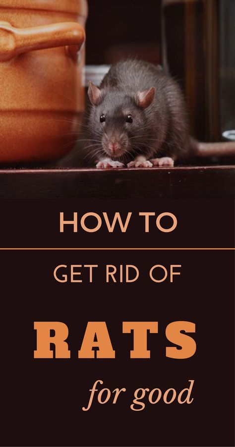 How To Get Rid Of Rats In My Car