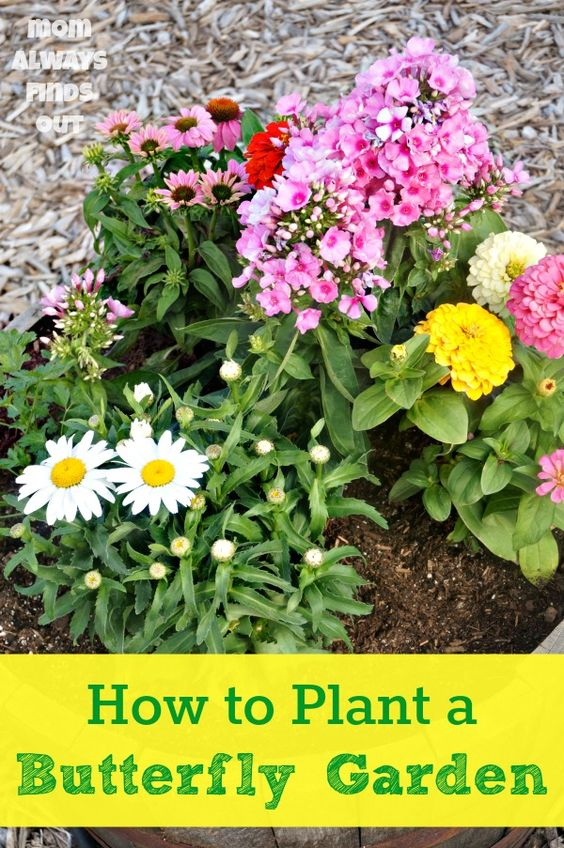 How to Plant a Butterfly Garden - List of plants proven to attract butterflies to your garden