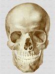 Galeria de imágenes médicas: Potter Ideas, Printables Miniatures, Imprimibles Miniatura, Gallery, Ilustración Científica, Image, Esta Web, Of This