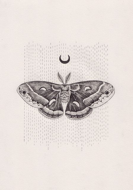 Luna moth scientific illustration - photo#12