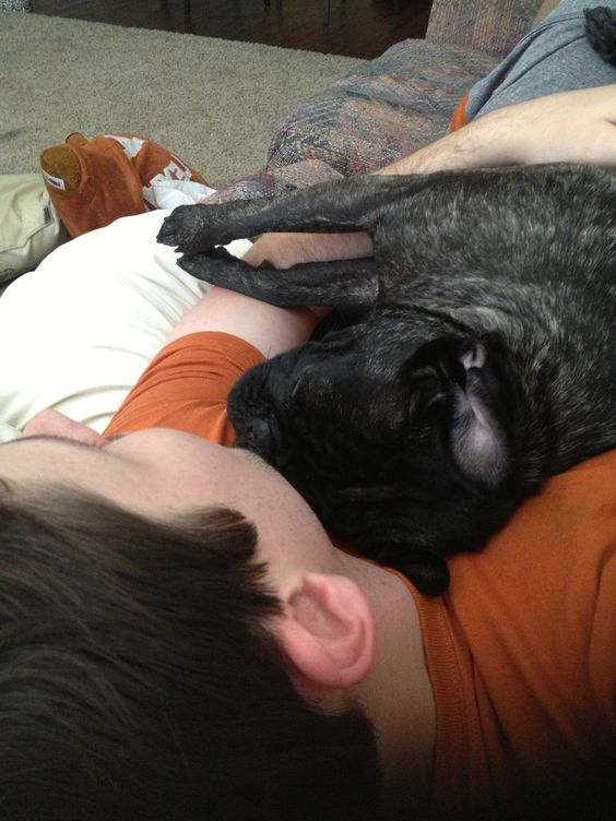 Lucy loves taking naps with her daddy! Happy Father's Day to all of the puggy dads