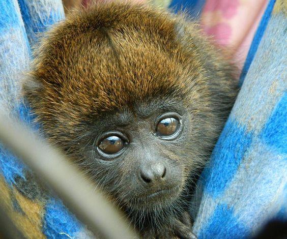 Nossos primatas