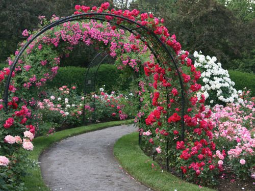 i want a rose garden someday