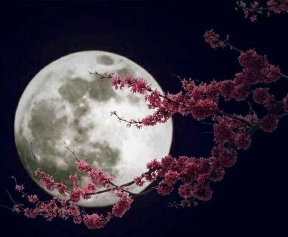 Chinesischer Mondkalender - Was stellen die Mondphasen eigentlich dar? - http://freshideen.com/trends/chinesischer-mondkalender-mondkalender-heute.html