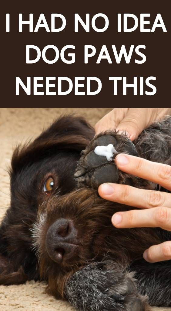How To Care For Your Dog S Paws Paw Care Dog Paw Pads Dog Paws