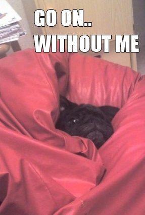 Love pugs? Follow me @divinewanderer2 #pugs #dogs #pets: