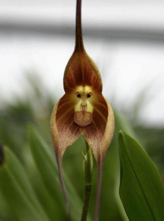 espèces d'orchidées rares