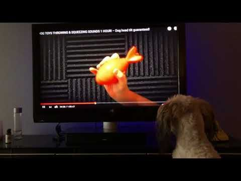 1 Best Dog Movie Dog Watching Video With Toys Squeeze