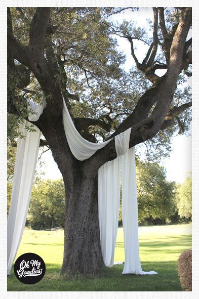 Wedding trees with white fabric...would be lovely when you add some lampions or jars with candles. Could look amazing when it gets dark