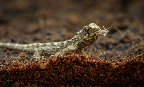 5_A unique tuatara has hatched at Chester Zoo. It's the world's first ever breeding of the species outside of their native New Zealand.  (11)