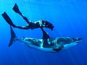 Shark!: Nice Sharks, Luv Sharks, Shark Photography, White Sharks, Shark Week, Animal, Great White Shark
