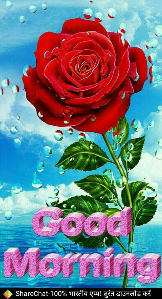 Phool Gulab Image Good Morning Images Good Morning Picture Latest Good Morning Images