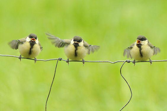 Vroege Vogels: Drie op een rij