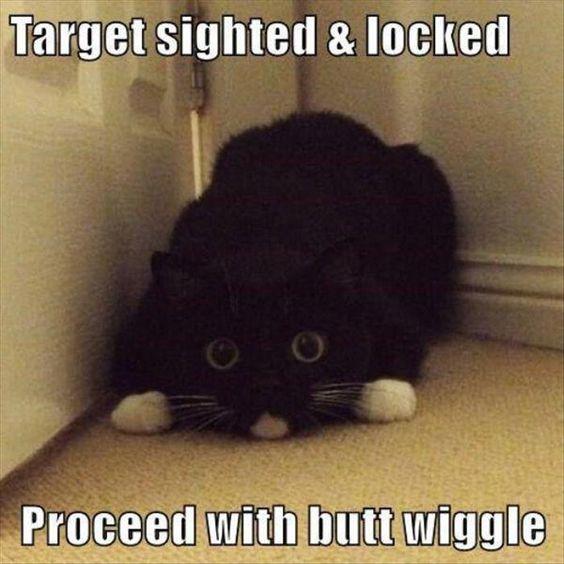 Stalking kitty, butt wiggle -  funny animal (18)