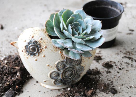Getting into sticking succulents into anything handy - darling and swell little gifts