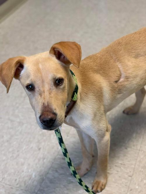 Dogs For Adoption Petfinder Dog Adoption Dog Rocks Dogs