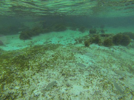 #rottnestisland #travelaustralia #aussie #snorkel #snorkeling #perth #gopro #straya by travelwizards http://ift.tt/1L5GqLp