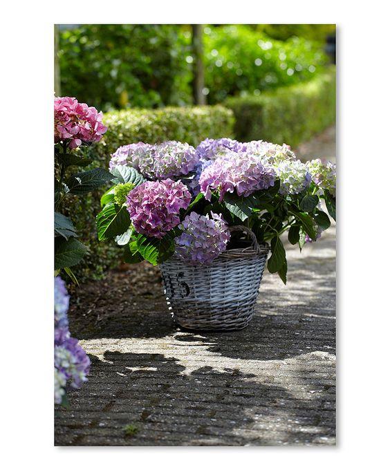 Another great find on #zulily! Hydrangea Planter Outdoor Canvas by Abbott #zulilyfinds