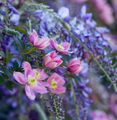Shabby soul: Beautiful Gardens