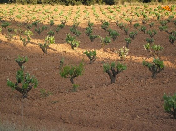 Vines al Altitude  Cara Nord Celler