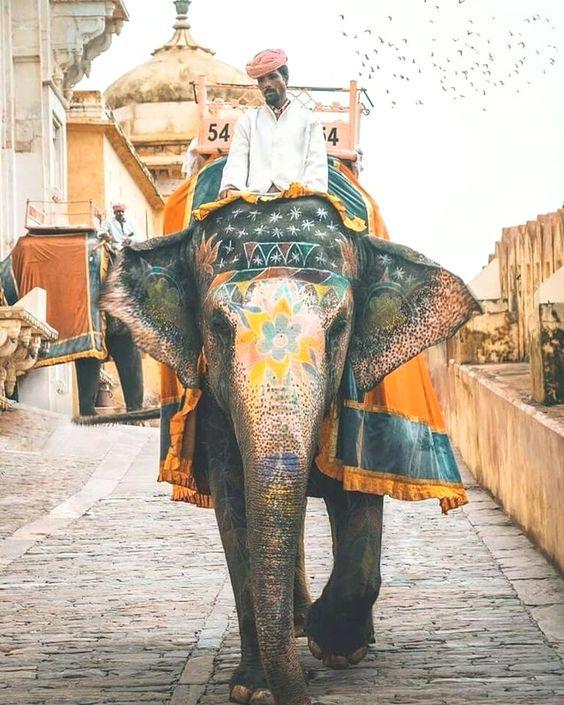 India Travel Få mere information på vores websted   http://storelatina.com/india/travelling  #travelindian #vacacionesindian #indian #indiaferias