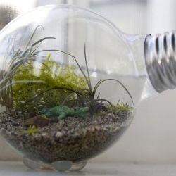 Julie shows you how to make an adorable little terrarium inside a lightbulb!