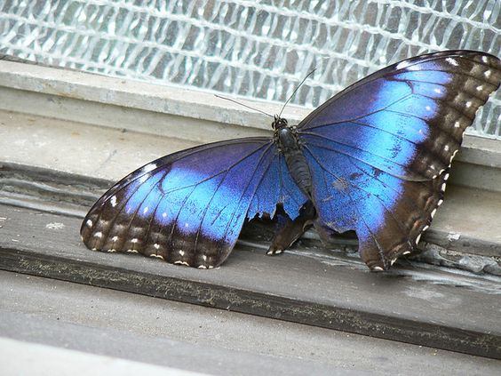 Image result for broken butterfly wings