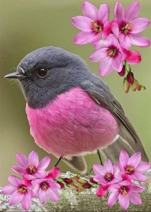Birds And The Bees Story Birds Lifespan Audubon Birds Of America 1937 Birds That Dance To Music 2018 Most Beautiful Birds Beautiful Birds Colorful Birds