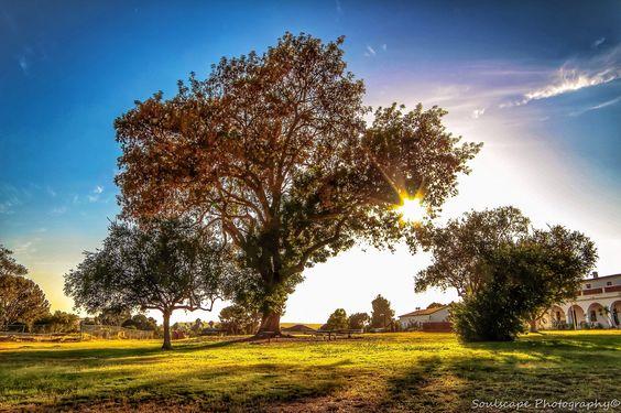 Tree Huggin' - San Luis Rey Mission - Oceanside, CA