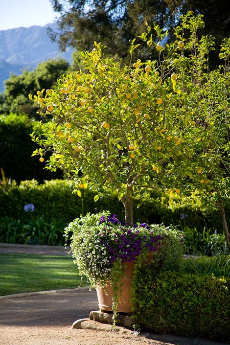 gardens  beautiful and four corners on pinterest
