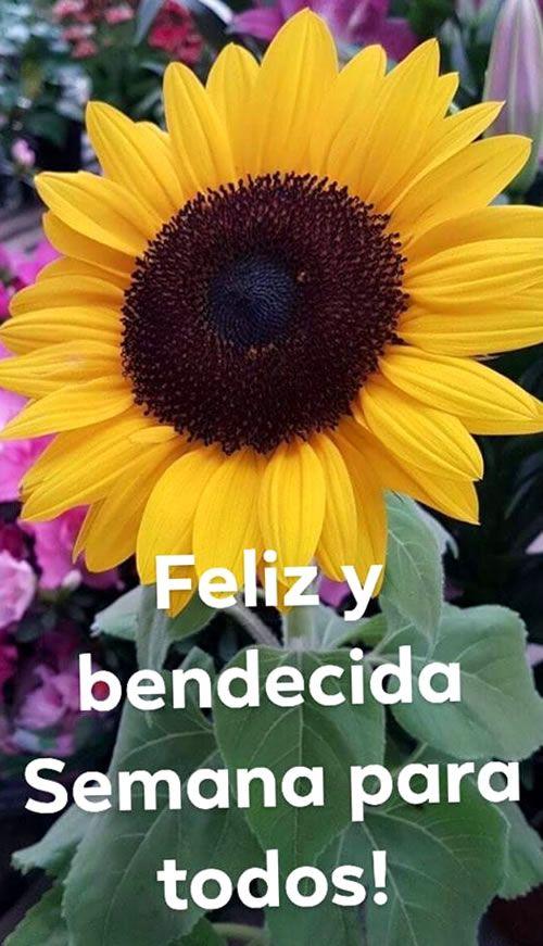 Buena Semana Buenos Dias Buenas Tardes Saludos De Buenos Dias