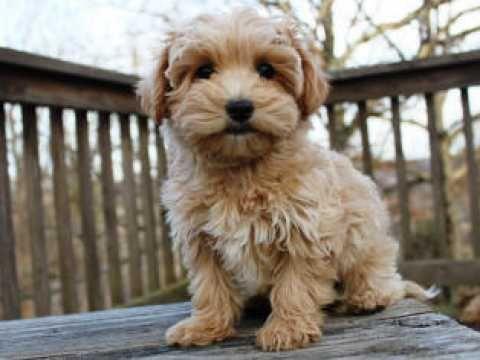 Pin On Puppies